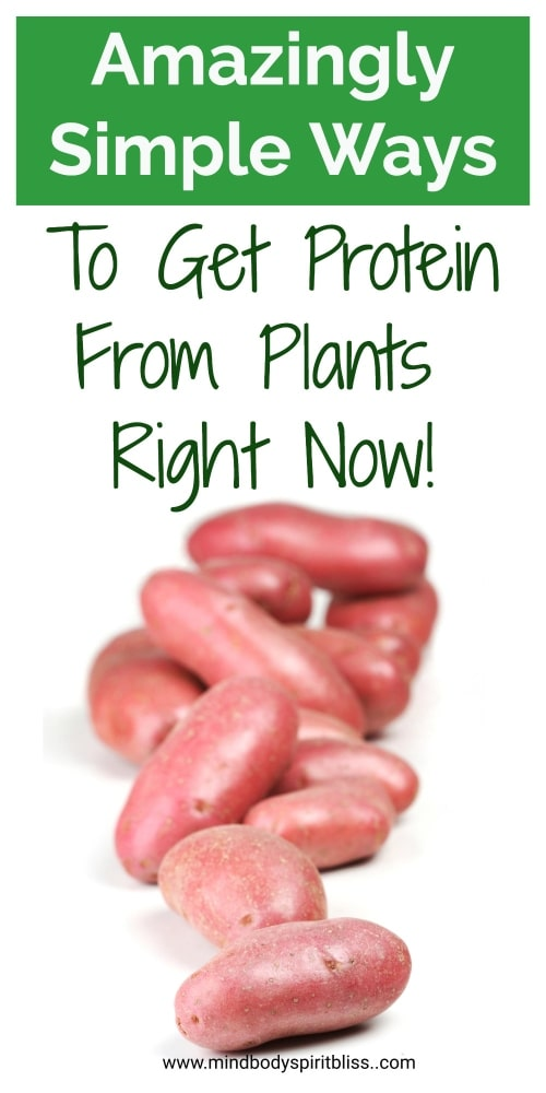 ways to get protein from plants pin